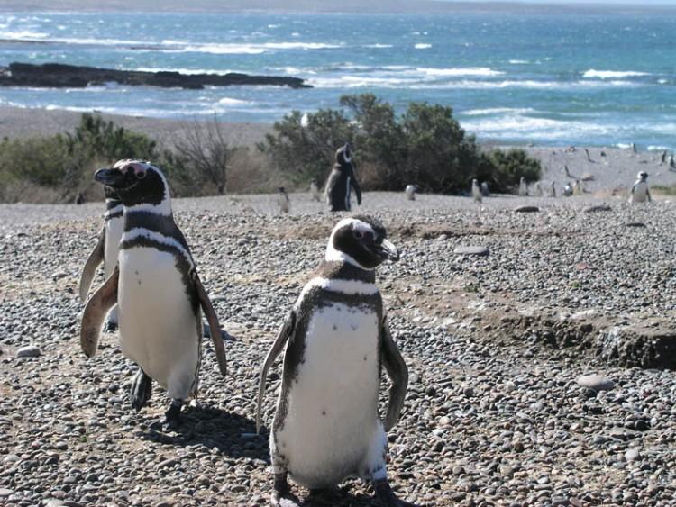 Puerto Madryn en noviembre