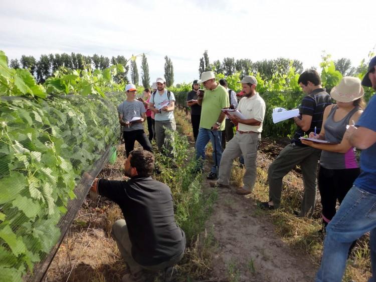 Se dio inicio al curso \Conocimiento ampelográfico de cultivares vitícolas para vinificar\