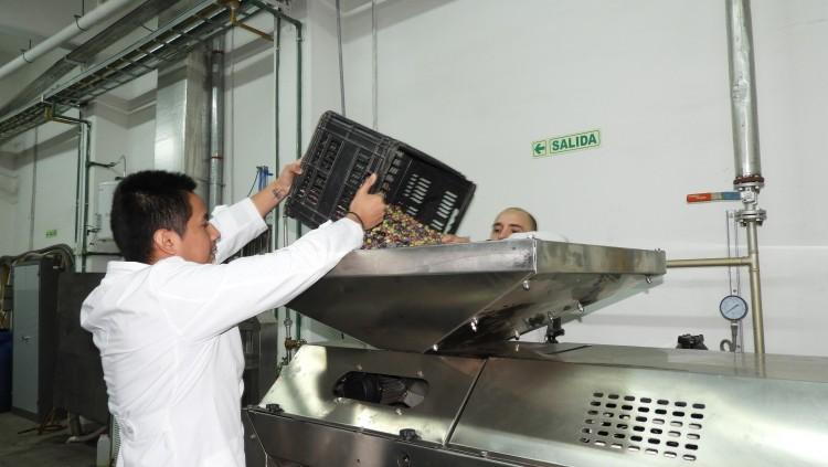 Producción de aceite de oliva en Planta Piloto