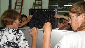 Elaboración de vino en la FCAI