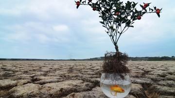 "Muestra Fotográfica: : ""CLIMA, SITUACION DE EMERGENCIA""  - Concurso internacional de fotografía 2015 de la Fondation  Alliance française -"