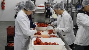 Producción de pulpa de tomate en la Planta Piloto de la FCAI